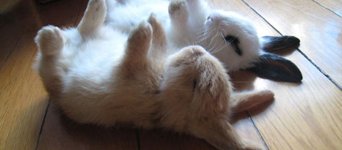 cutest-bunny-rabbits-01